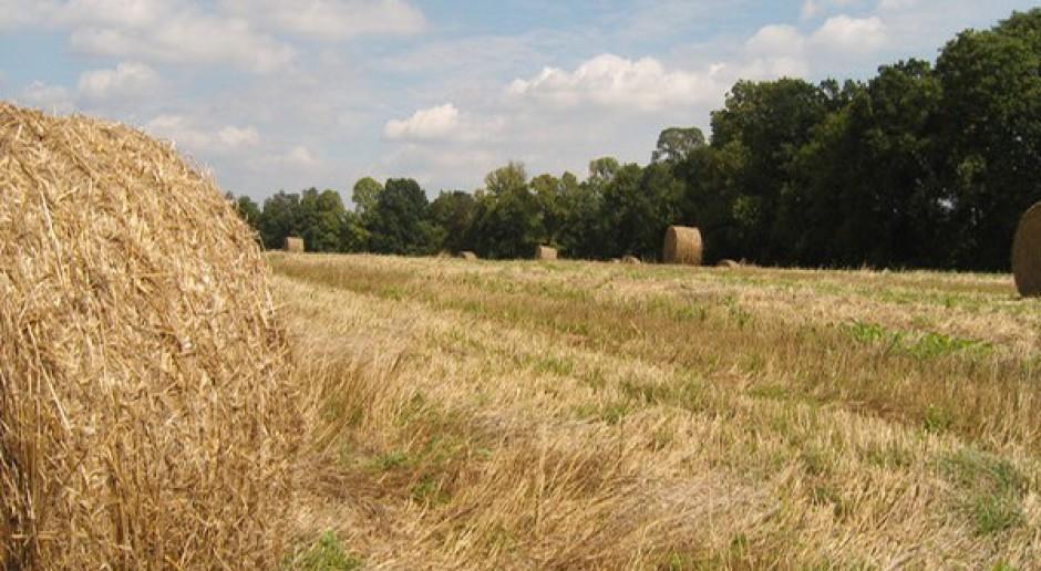 Zbiory zbóż na poziomie 23-25 mln ton