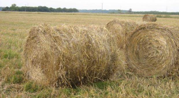 Rozwój produkcji biogranulatów
