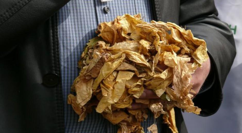 Plantatorzy tytoniu na cenzurowanym