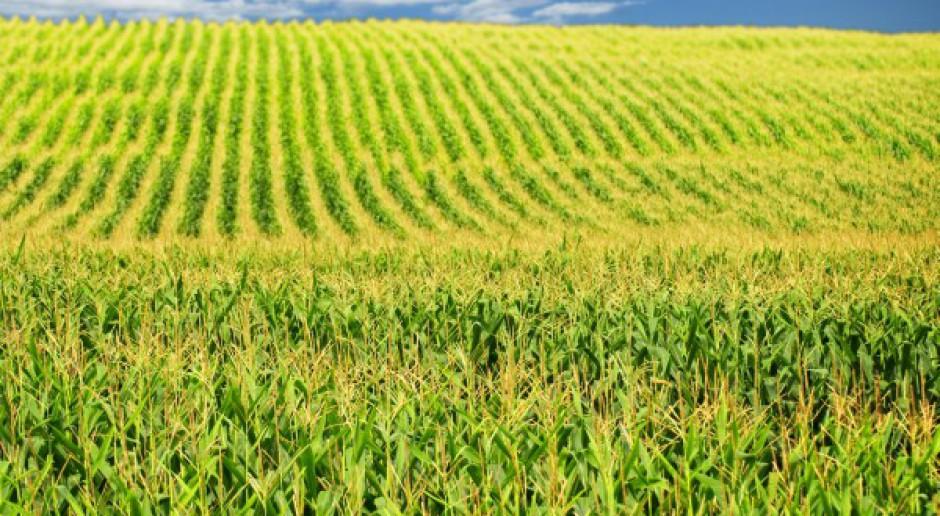 Bezprawnie blokują uprawę GMO