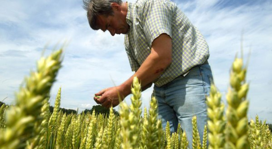 Pilne: Cięcie prognoz produkcji zbóż