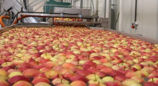Jabłka są tańsze niż w roku ubiegłym