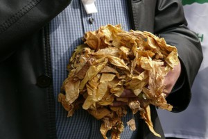 Akcyza na niepocięte liście tytoniowe