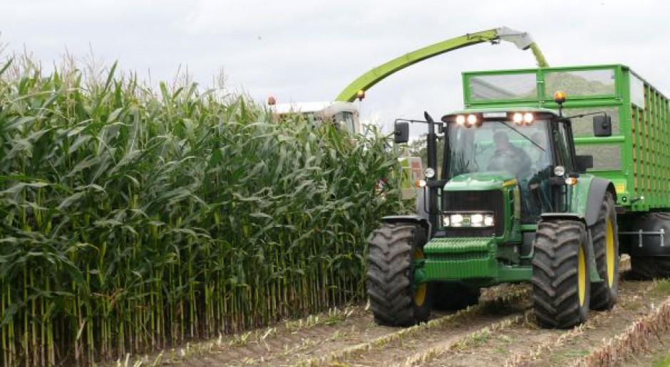 Zaawansowany zbiór kukurydzy na kiszonkę