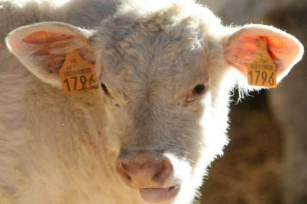 Wzrost cen wołowiny