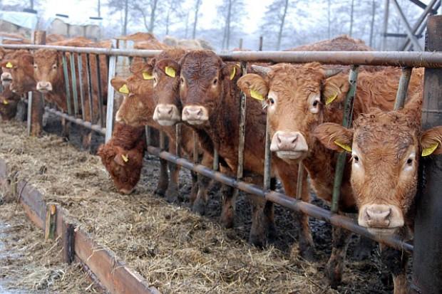 Spadek produkcji wołowiny w UE