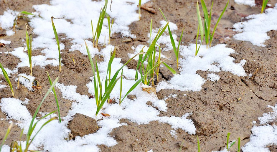Przygotować rośliny do zimy