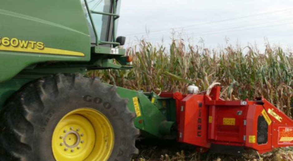 Plony kukurydzy ziarnowej mniejsze o 10 proc.
