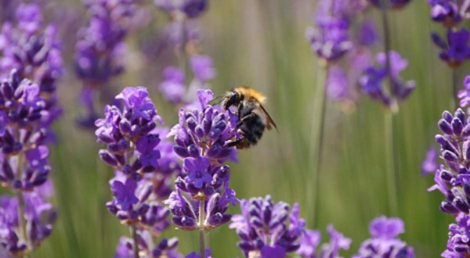 Bezpieczeństwo pszczół