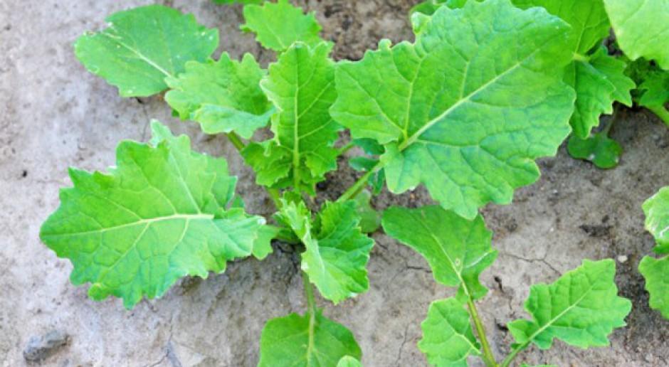 Nowy herbicyd z Makhteshim-Agan