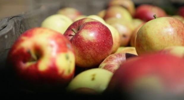 Polska pokonała w jabłkach USA