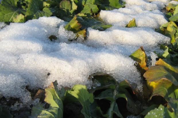 Śnieg znika – czym to grozi?