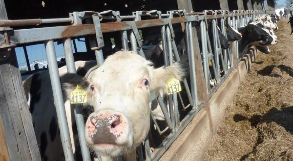 Kara za przekroczenie produkcji mleka zostanie wyliczona