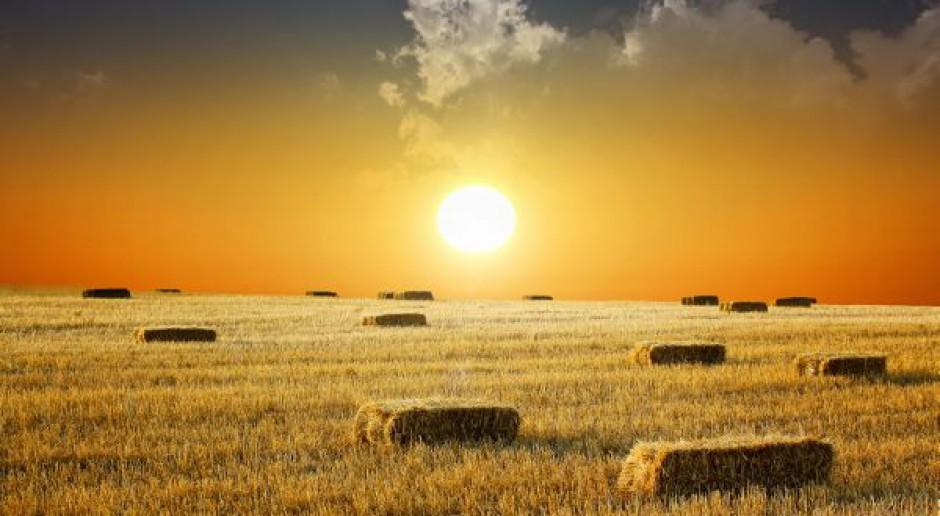 Potencjał przywróci czterech na pięciu rolników