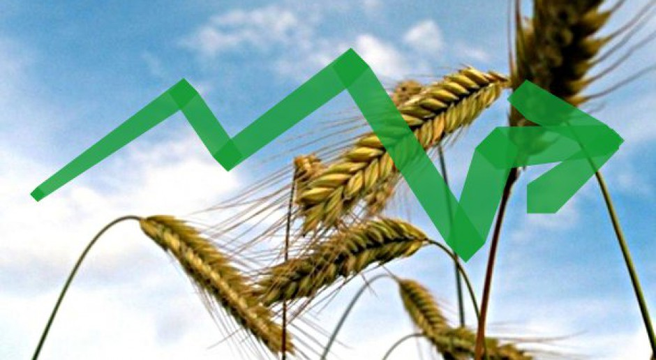 Ceny zbóż wytraciły impet