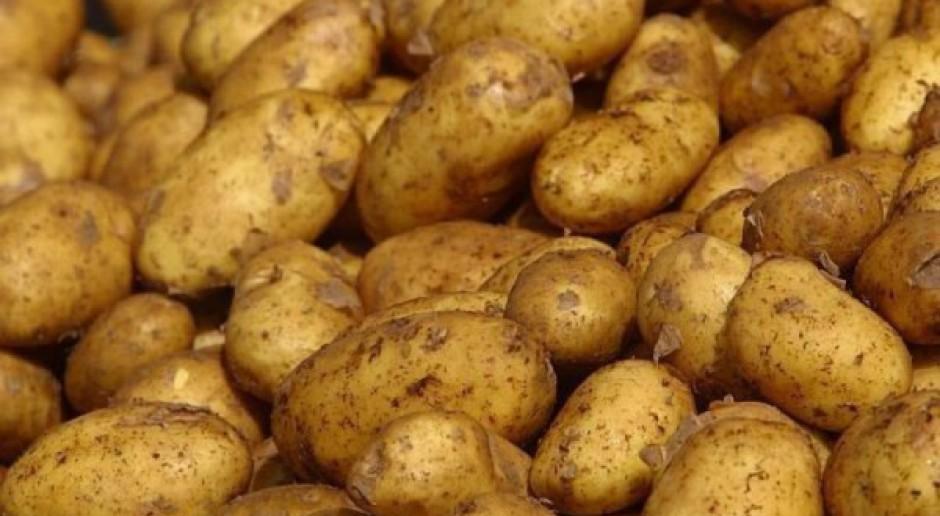 Od kwietnia zakaz importu sadzeniaków ziemniaka z UE do Rosji