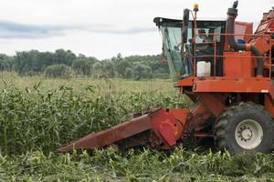 GMO zakazaliśmy skutecznie?