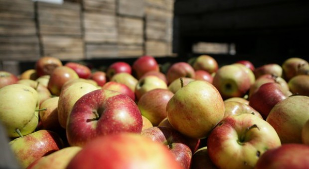 Rosjanie chętnie kupują polskie jabłka