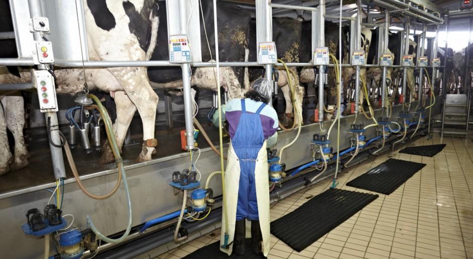 Ciągły wzrost dostaw mleka