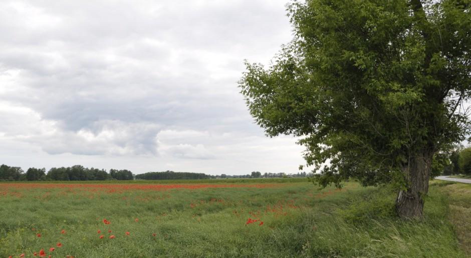 Cena ziemi rośnie szybciej niż wpływy do ANR