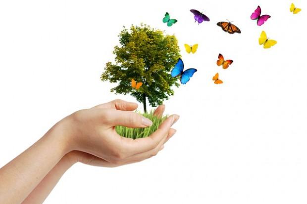 Od A do Z: E jak ekologiczna żywność