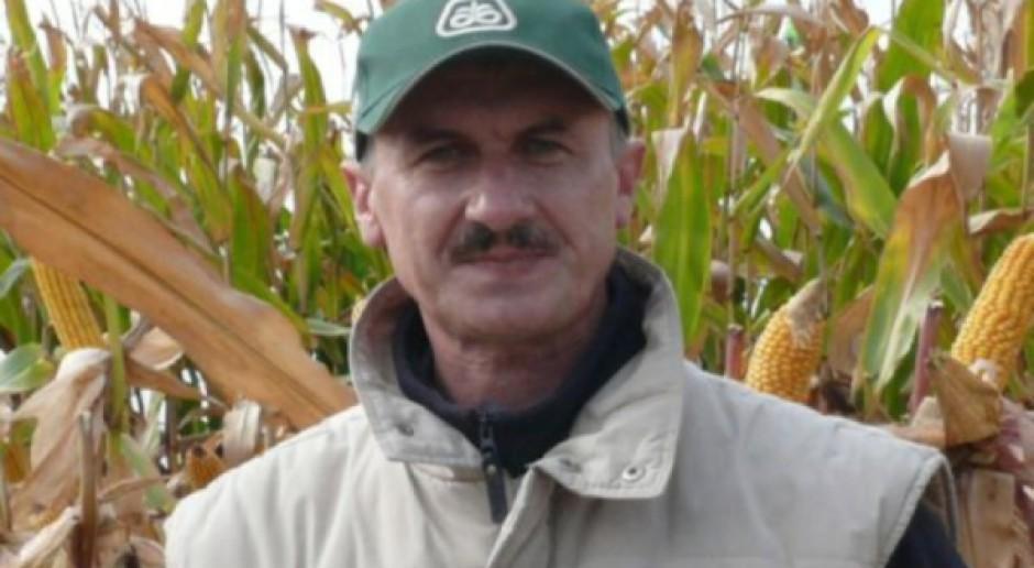 Późna odmiana kukurydzy na południe kraju