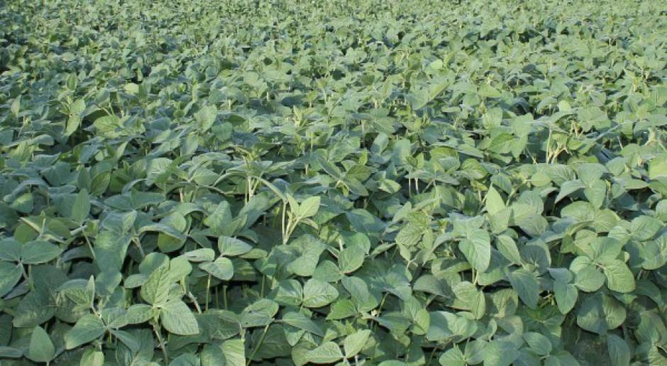 Opolszczyzna wprowadza uprawę soi na dużą skalę