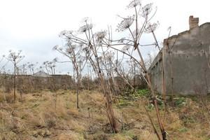 Wojewoda za obowiązkowym niszczeniem barszczu Sosnowskiego