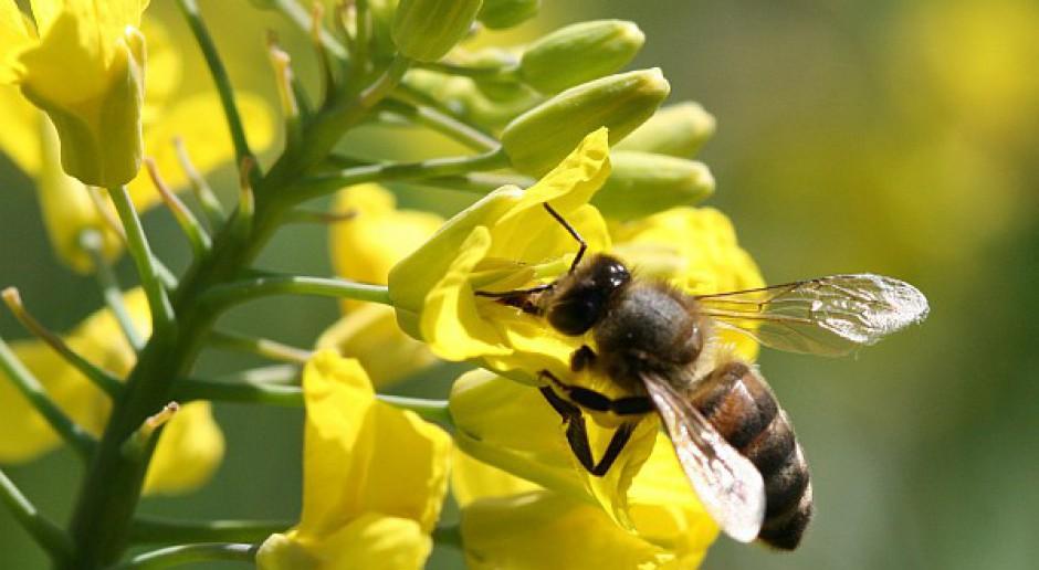 Warto dbać o owady zapylające