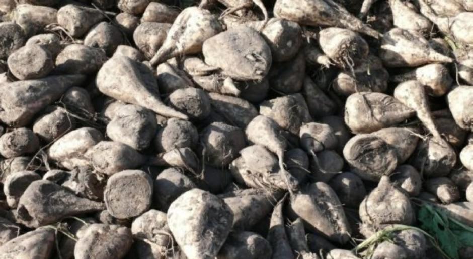 KZPBC: Kwoty cukrowe do 2017 r. złe dla plantatorów