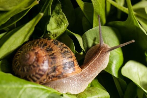 Kompletny program żywieniowy dla ślimaków