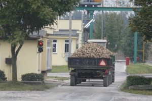 Cena minimalna za buraki w KSC – 148 zł/t netto
