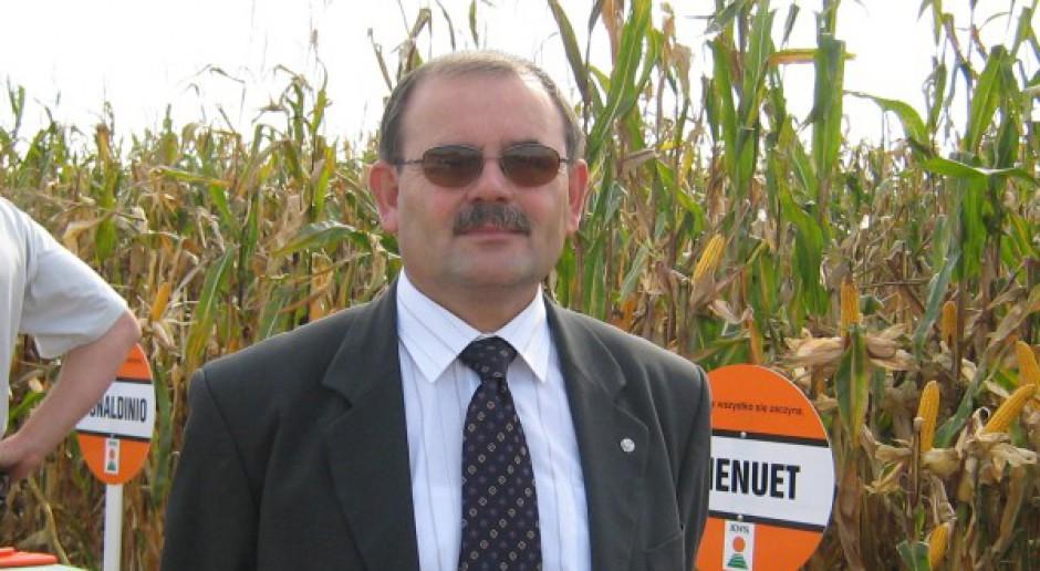 Polska może być eksporterem kukurydzy?