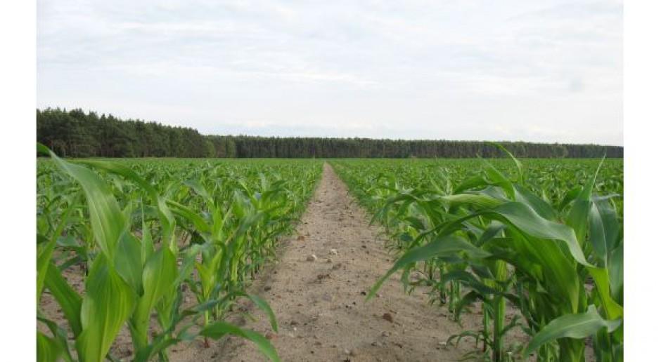 Wybierz swoje własne rozwiązanie do ochrony kukurydzy przed chwastami