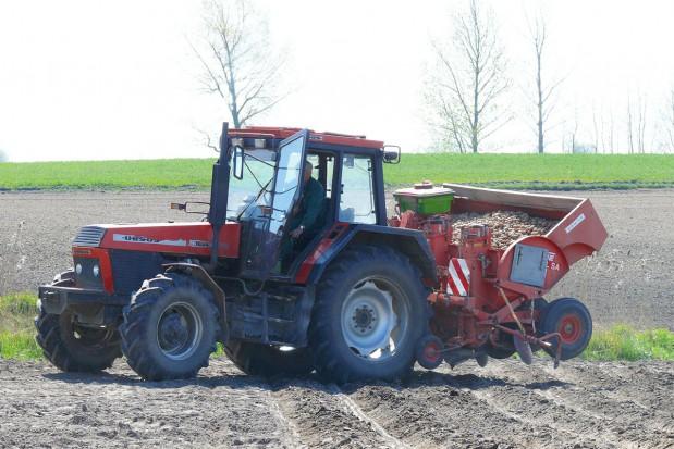 Zasady prawidłowego sadzenia ziemniaków