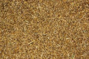 Mizerne zmiany cen zbóż