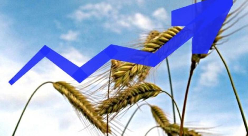 Potężny wzrost cen zbóż