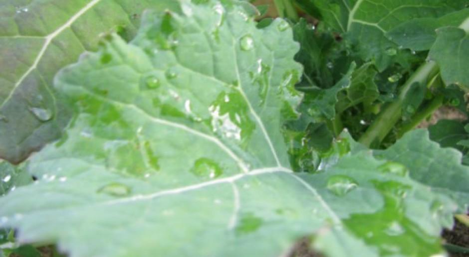 Intensywny wzrost roślin – potrzebne składniki pokarmowe