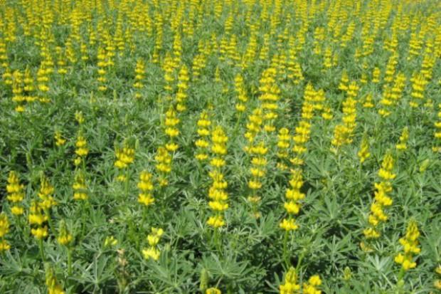 Chcą ograniczyć import roślin wysokobiałkowych