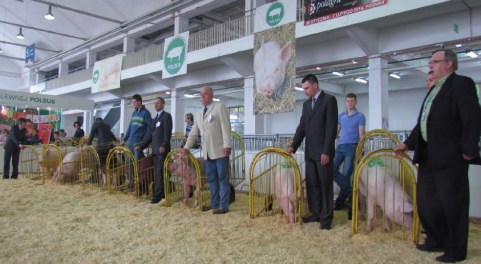 Najlepsze świnie w Poznaniu