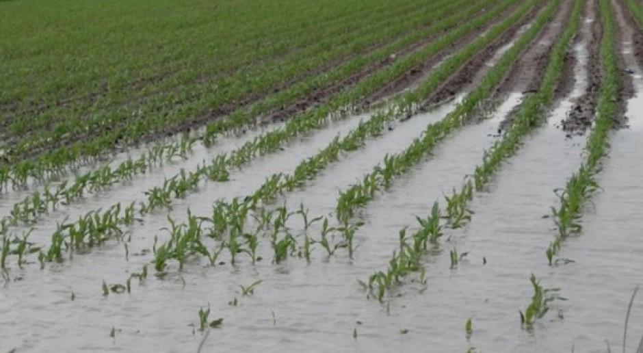 PiS apeluje o pomoc dla rolników z Mazowsza