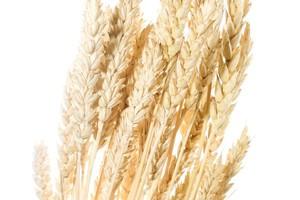 Spadek cen zbóż pomoże trzodziarzom