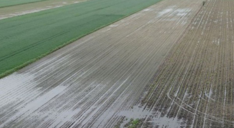 Powszechny system ubezpieczeń upraw rolnych