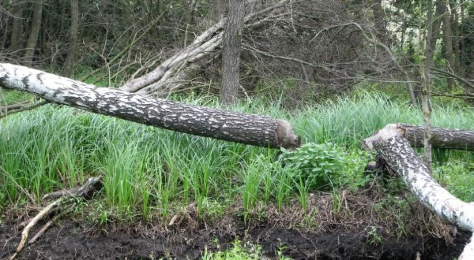 Skarb Państwa odpowiada za wszystkie szkody wyrządzone przez bobry