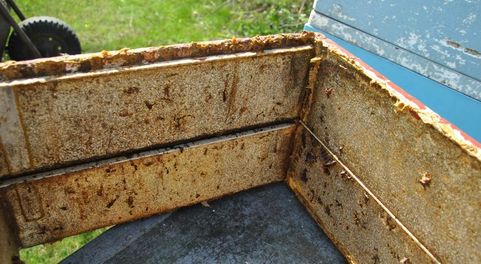 Nawłoć (nie)dobra dla pszczelarzy
