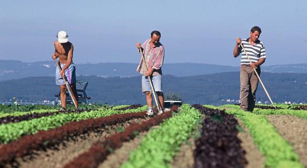 Dopłaty oddzielone od produkcji to korzyść dla rolników