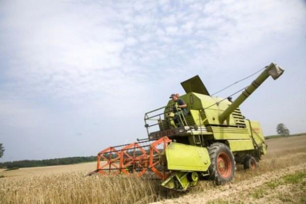 Wszystkie gatunki zbóż ozimych zbierane