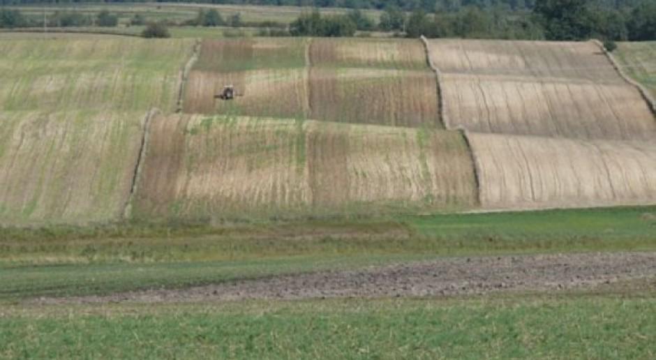 Kolejny wielomiesięczny dołek na pszenicy!
