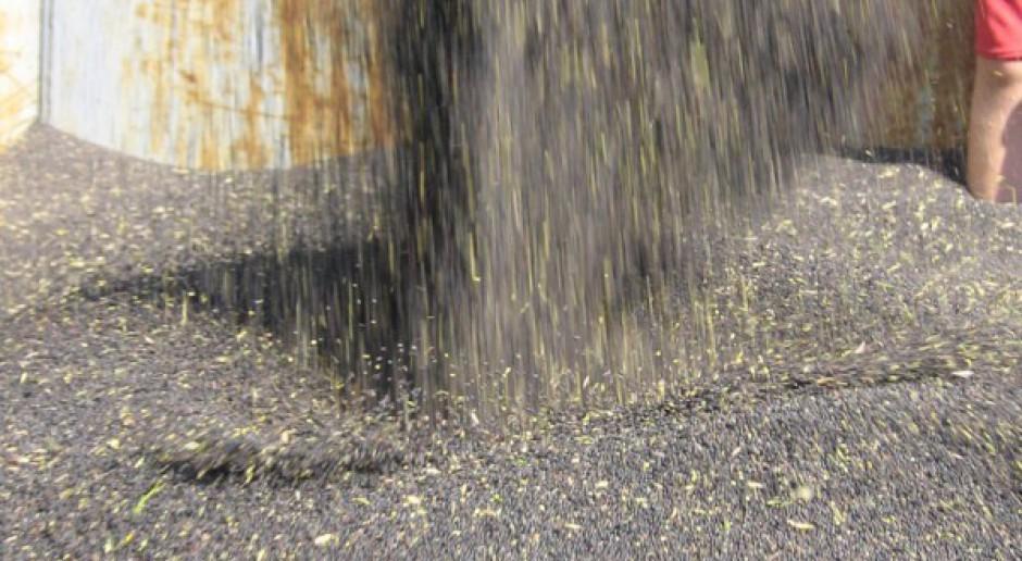 Niskie ceny rzepaku – rolnicy zapowiadają protest