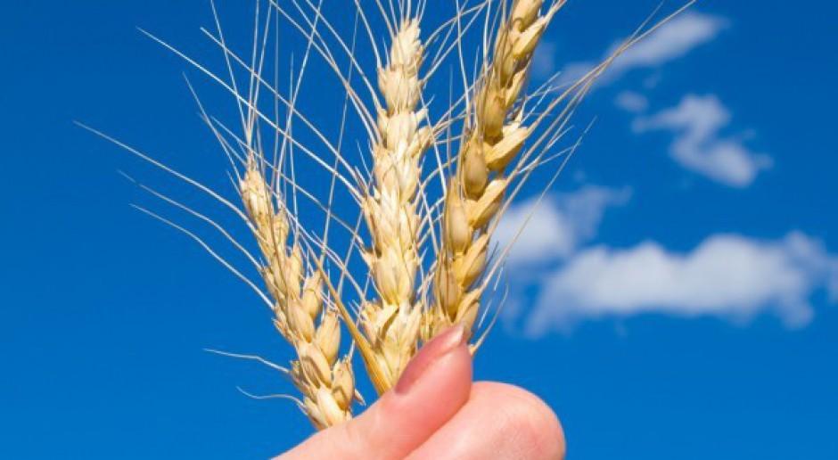 PZPRZ: Dramatyczna sytuacja na rynku zbóż